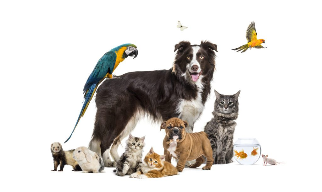 A variety of pet companions
